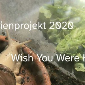 Wish You Were Here - Musikvideo