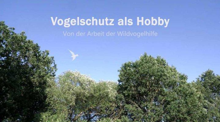 Vogelschutz als Hobby. Von der Arbeit der Wildvogelhilfe.